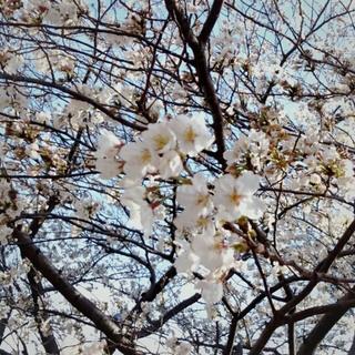 2013-03-22_09_47_35.jpg