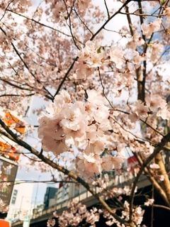 sakura-db287-thumbnail2.jpg