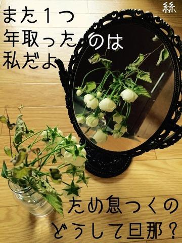 image-ed6e4.jpg